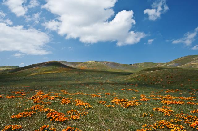 California landscape © Brooke McAllister