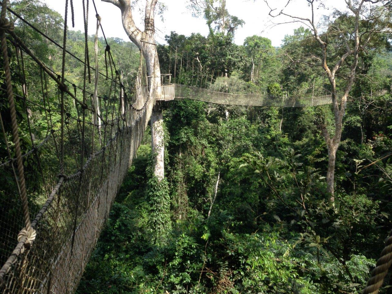 Kakum forest walkway, by Peter Harris