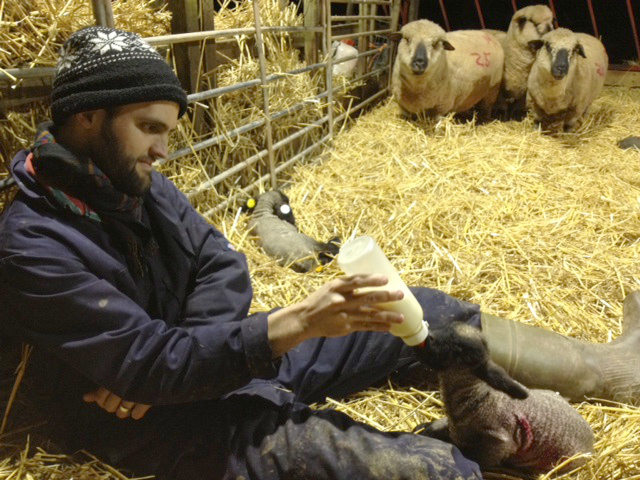 Will bottle-feeding a baby lamb at his organic farm