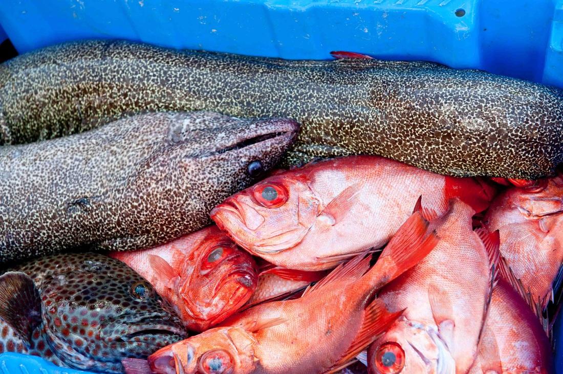 Pesca del día © Gillian Moore
