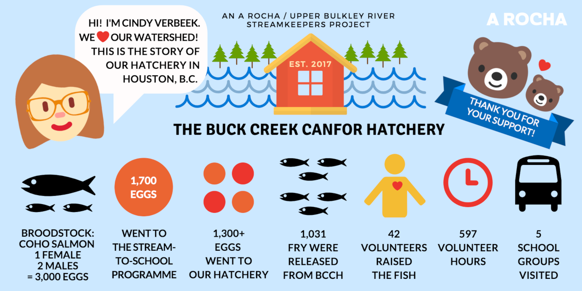 Buck Creek Canfor Hatchery results