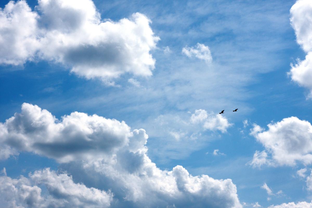 Blue Skye, por Mark Purcell